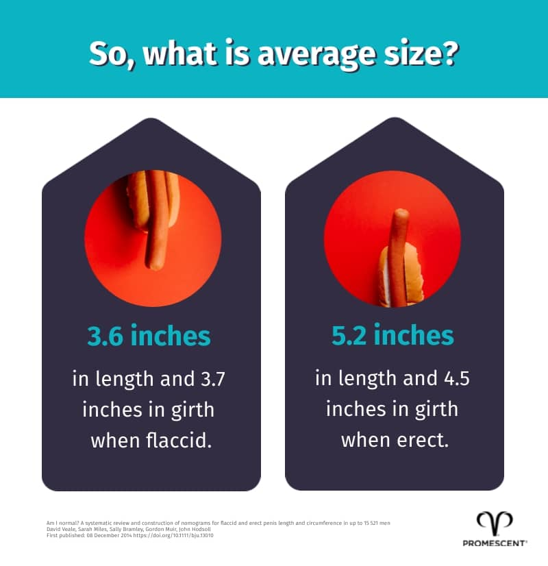 What is the average penis size