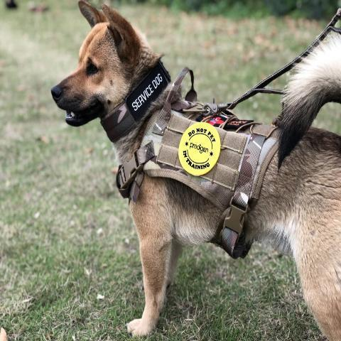 Premium Military Tactical Dog Harness And Vest, RG Harness And Leash