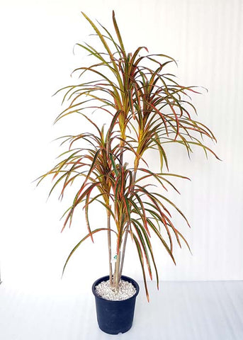 ARTIFICIAL BROWN LEAF YUCCA PLANT - 4 FT