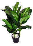 Ginni Bloom Artificial Dieffenbachia Plant