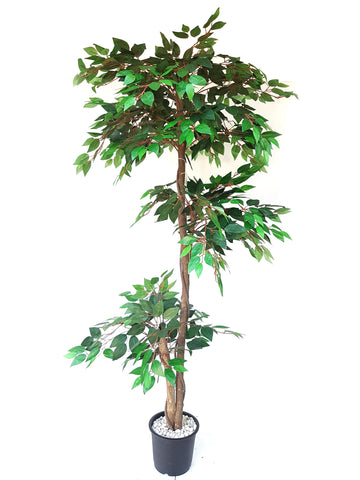 Artificial Green Ficus Plant - 5.5 ft