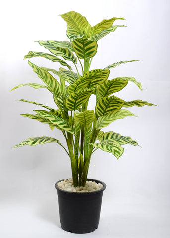 Artificial Calathea plant, 3 ft (Set of 5)