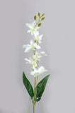WHITE ORCHID/ DENDROBIUM ORCHIDS (WHOLESALE PACK OF 24 STEMS)