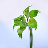 Buy Artificial Calla Lily flower in Mumbai