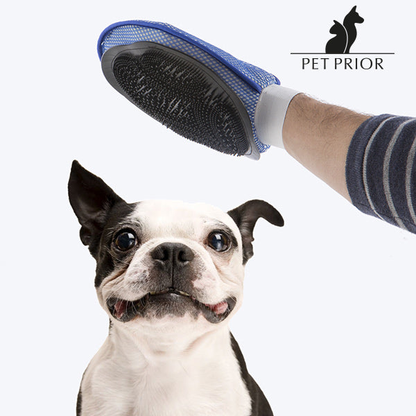 Pet Prior pet Brush and Mitten