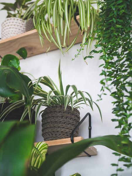 Plants & your mental health
