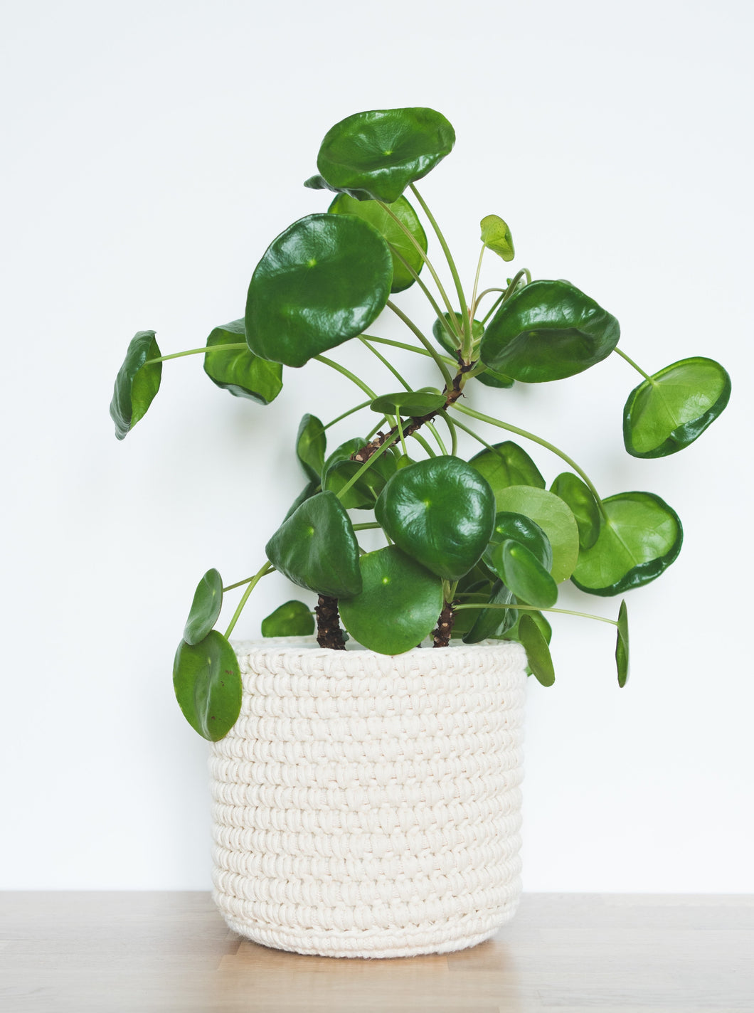 Medium eco plant pot - natural - Knttd coloured handmade plant pot cover made from recycled cotton yarn with watertight inner pot made from recycled plastic