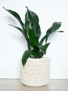 Knttd large handmade plant pot planter in cream white with aspidistra plant