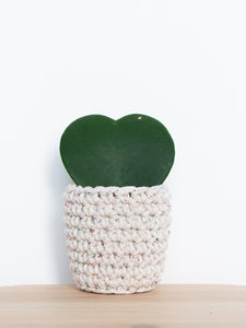 Mini crochet cotton sustainable eco plant pot - rainbow dust cream | Knttd