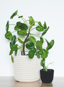 Mini eco plant pot - black - Knttd