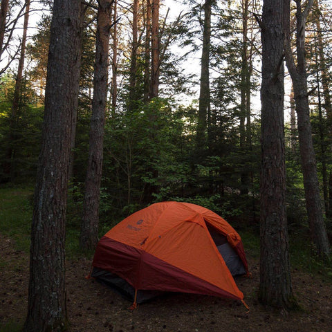 An orange tent pitched in the woods