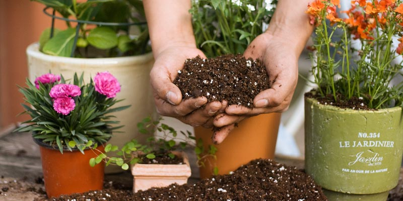 Pesche's Professional Potting and Planting Soil
