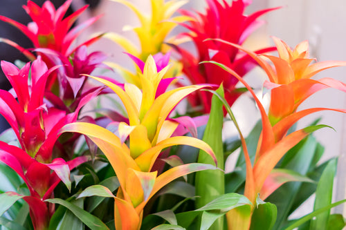 Bromeliads - A Taste of the Tropics!