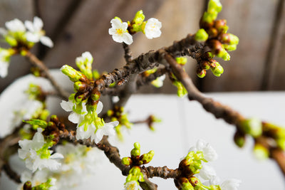 Force Winter Branches to Enjoy a Burst of Spring