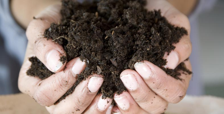 Less Toil with Good Soil - Healthy Soil Means Healthy Plants