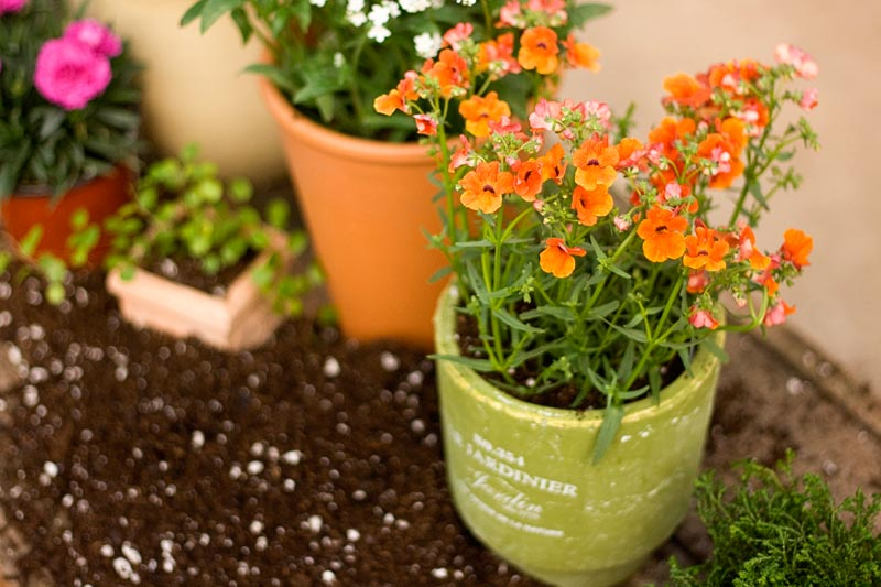 _pottingmix-annuals-pots