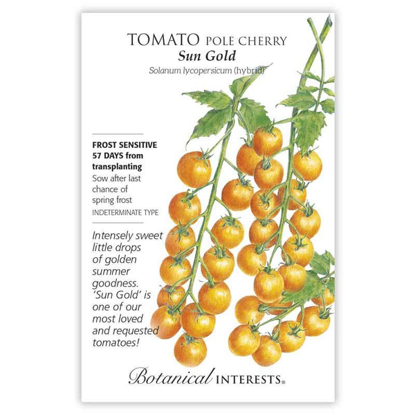 Tomato Pole 'Sun Gold Cherry'