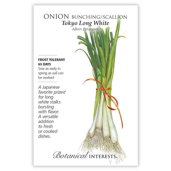 Onion 'Tokyo Long White Bunching/Scallion'