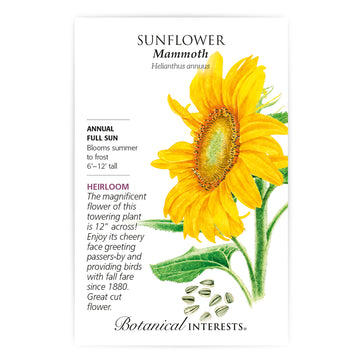 Sunflower 'Mammoth'