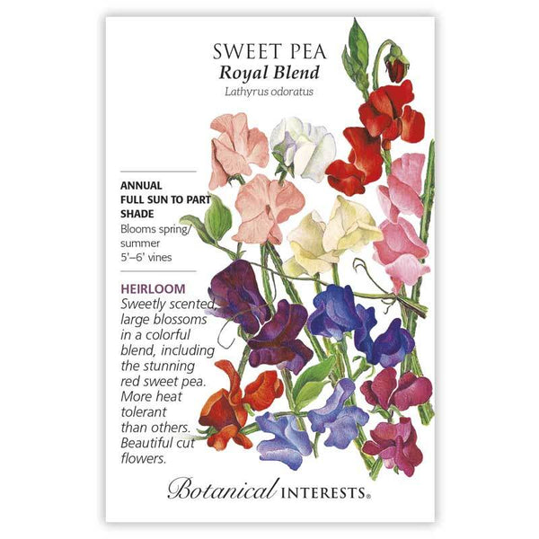 Sweet Pea 'Royal Blend'