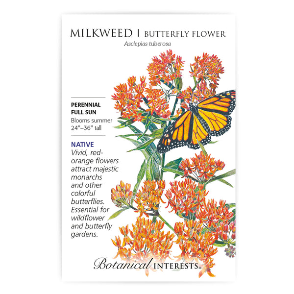 Milkweed 'Butterfly Flower'