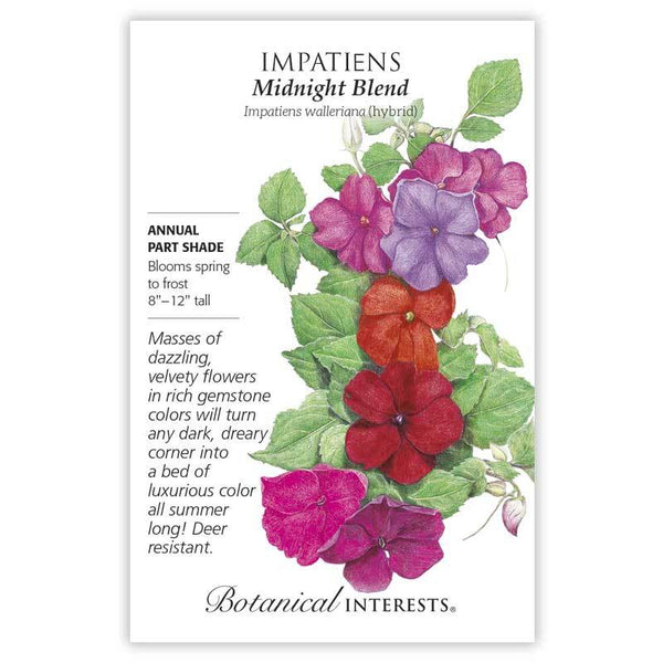 Impatiens 'Midnight Blend'