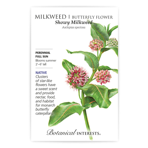 Milkweed 'Showy/Butterfly Flower'