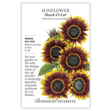 Sunflower 'Shock-O-Lat'