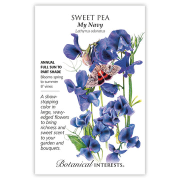 Sweet Pea 'My Navy'