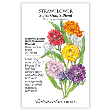 Strawflower 'Swiss Giants Blend'
