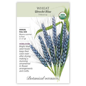 Wheat 'Utrecht Blue'