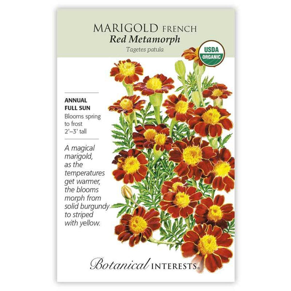 Marigold French'Red Metamorph'