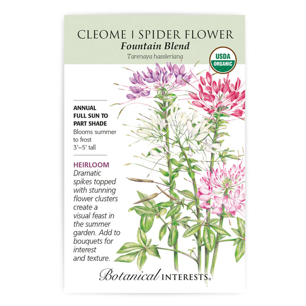 Cleome (Spider Flower) 'Fountain BlenD'