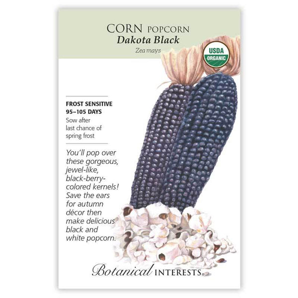 Corn 'Dakota Black Popcorn'