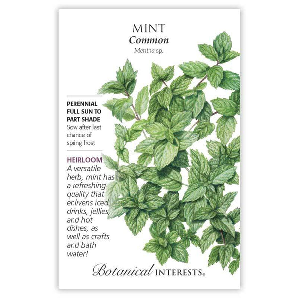 Mint 'Common'
