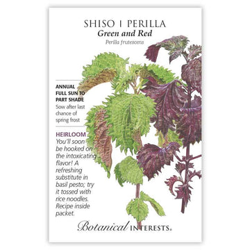 Shiso 'Perilla Green and Red'