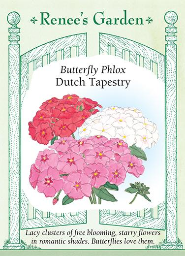 Phlox 'Dutch Tapestry'