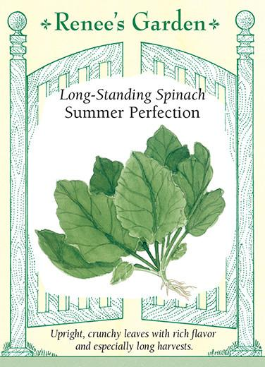 Spinach 'Summer Perfection'