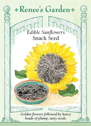 Sunflowers 'Edible Snack Seed'