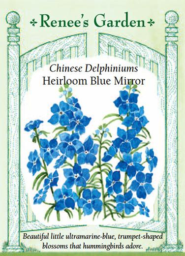 Delphiniums 'Chinese Blue Mirror'