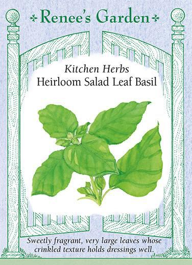 Basil 'Salad Leaf '