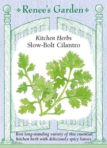 Cilantro ' Slow Bolt'