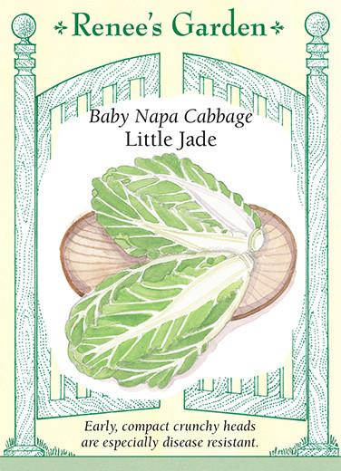 Cabbage 'Baby Napa Little Jade'