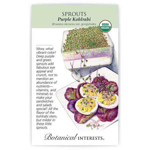 Sprouts 'Purple Kohlrabi'