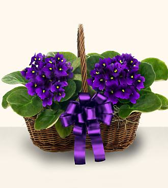Violet Blooming Basket