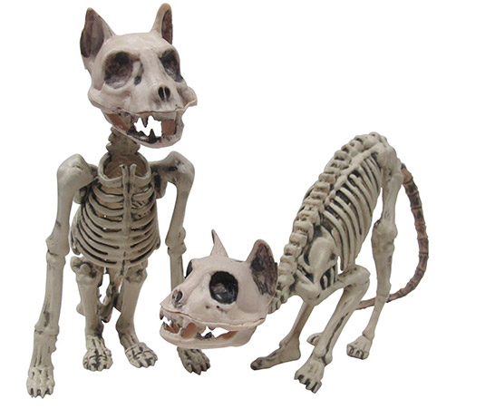 Cat Skeleton: 2 Assorted Styles, 12 to 18 inches