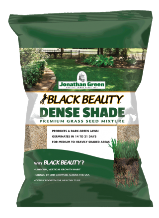 Black Beauty Dense Shade Grass Seed