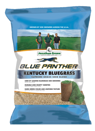 Blue Panther Kentucky Bluegrass Grass Seed