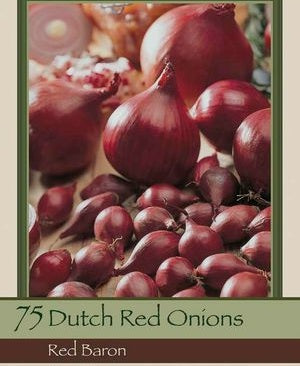 Dutch Onion Sets 'Red Baron'