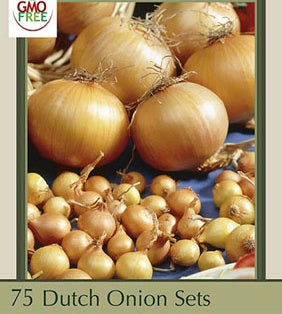 Dutch Onion Sets 'Yellow Stuttgarten Riesen'